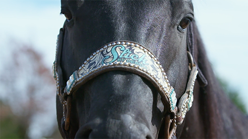 Close front view of black horse.