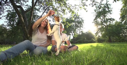 Mother and son playing with small white dog.